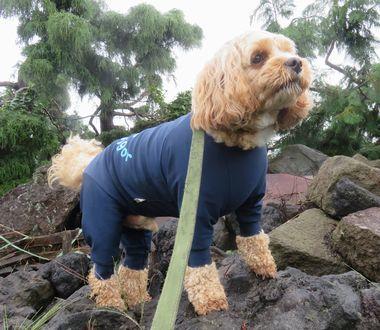 017雨散歩