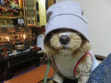 012帽子