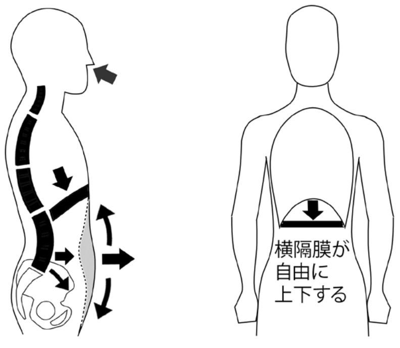 正しい横隔膜呼吸のコピー