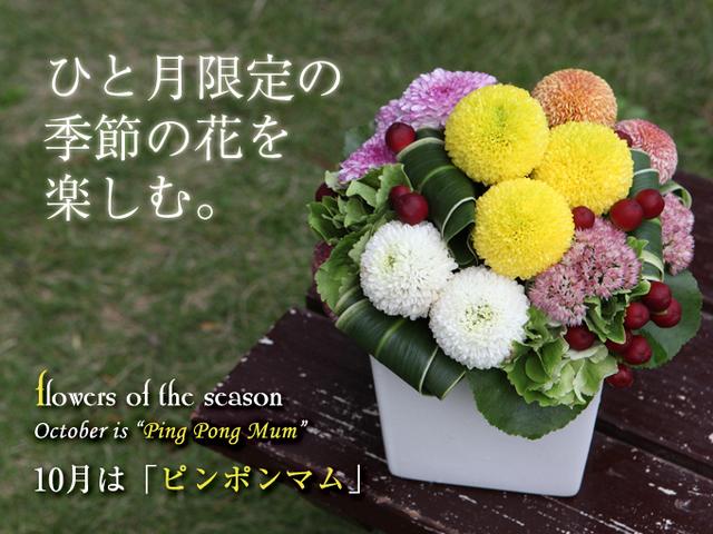 マム 秋 おすすめ 花 菊 アレンジ 花束 おしゃれ 配送