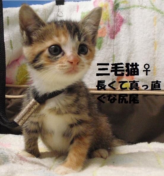 20181010三毛猫