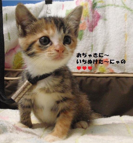 猫181005160144_三毛
