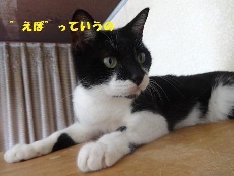 えぽDSC03173