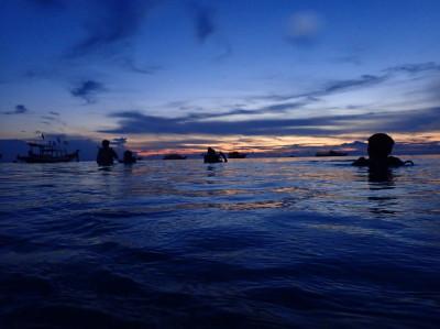 オイランハゼ、タオ島ダイビング