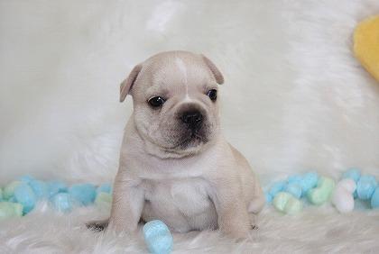s-2018-08-15犬 001 (1)
