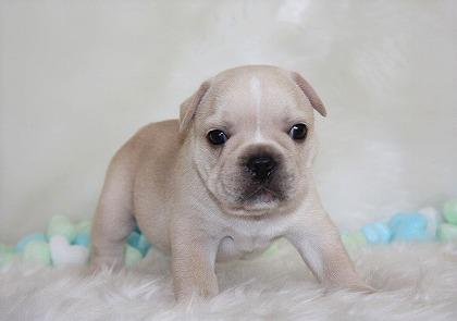 s-2018-08-15犬 001 (2)