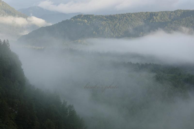 森林を這う雲海 38120001署名入りedited
