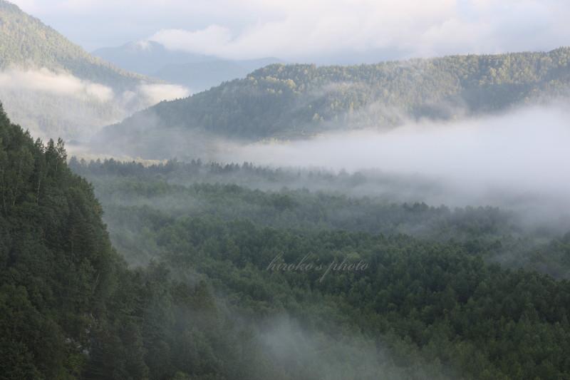 森林を這う雲海 39040001署名入りedited