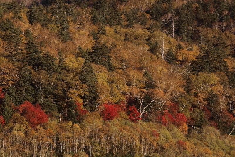 朝陽を浴びる木々 55460001