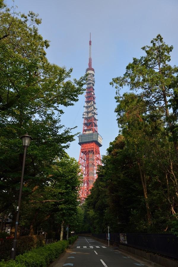 蔵出し~夏の早朝の東京タワー