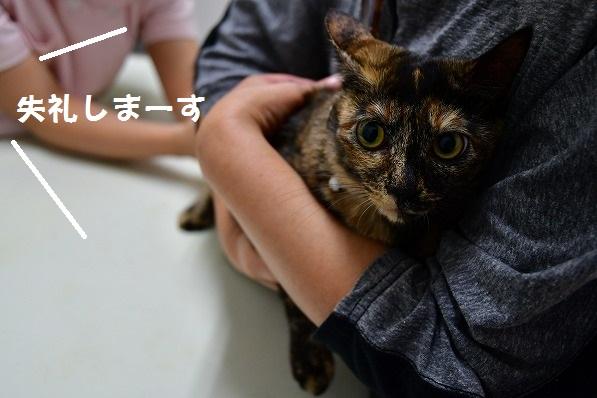 葉子ちゃんのワクチン