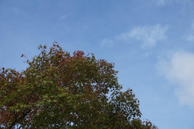 空も青くて良いですね~