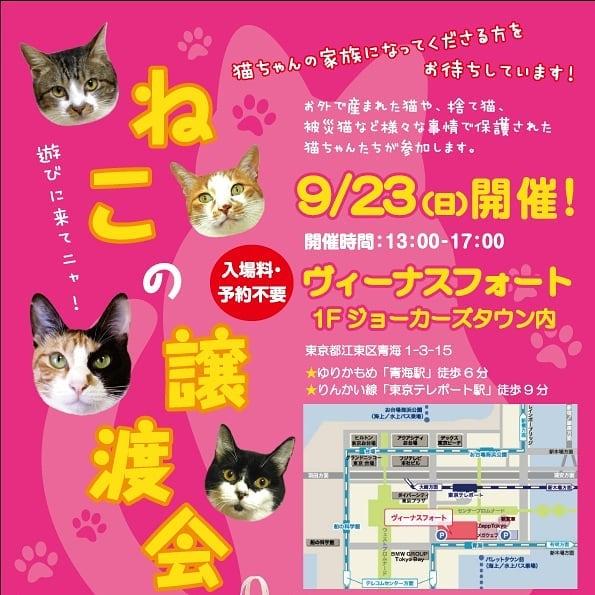 猫の譲渡会~お台場フライヤー
