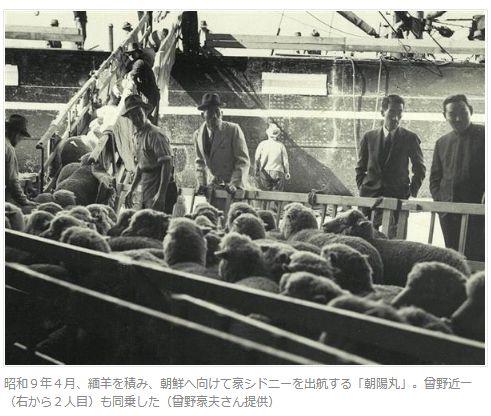 緬羊の積み出し 豪から朝鮮へ