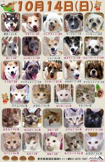 ALMA ティアハイム2018年10月14日 参加犬猫一覧