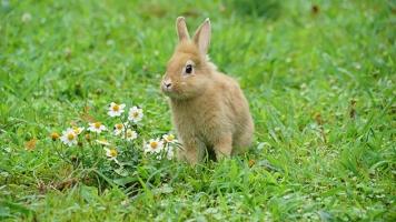 仮面ライダービルド ウサギ