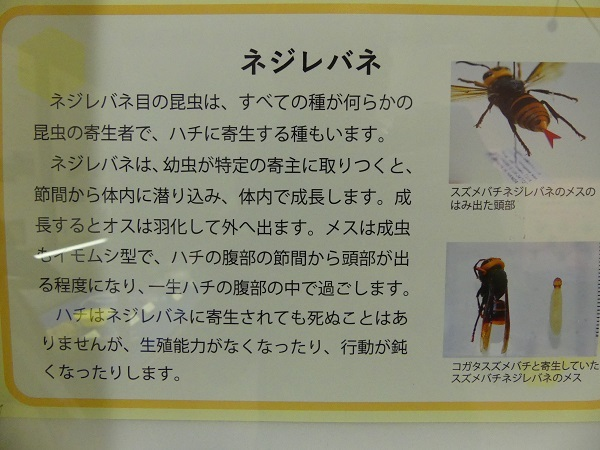 だぶるけいの活動日記♪ 2018夏「埼玉県立自然の博物館に行っ