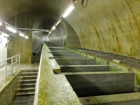 白丸ダム潜孔式魚道・地下トンネル内