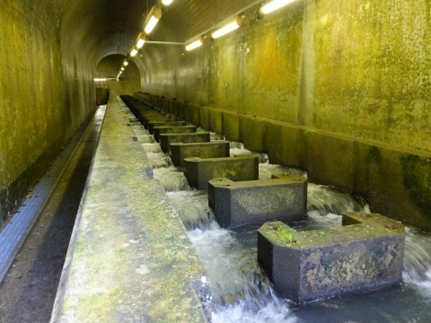 白丸ダム魚道・地下トンネル内