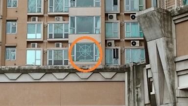 DSC_1182蜘蛛の巣図案