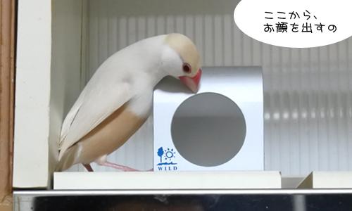ぴのしゃんのがんばった日記_4