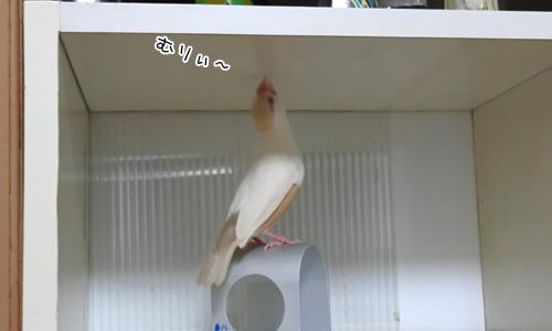 ぴのしゃんのがんばった日記_7