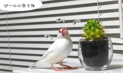 ペック台風、進路不明_4
