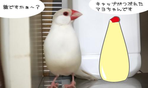マヨネーズ体形対決_1