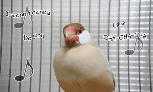 この歌にピンときた!&迷子のセキセイちゃん_1