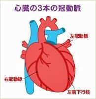 心臓の冠動脈