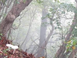 180929岳s (3)
