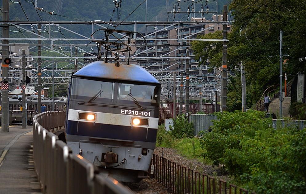 DSC_3427r.jpg