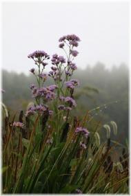 181006E 020秋の花23