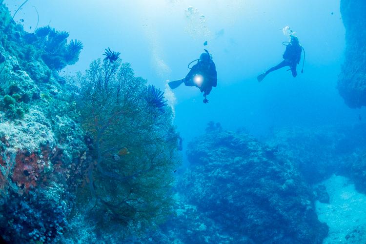 辺戸岬ダイビング 3
