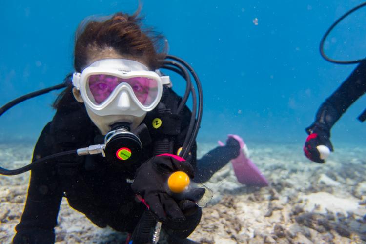 生卵 ダイビング 4