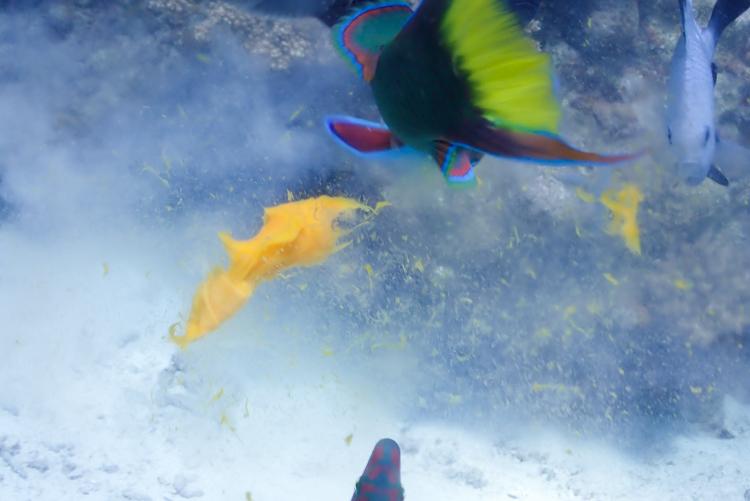 生卵 ダイビング 9