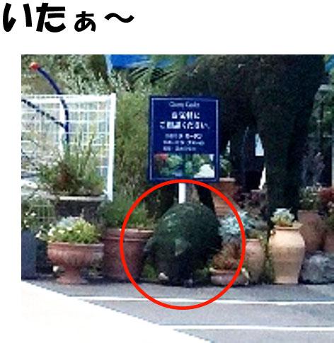 kashi-flower-park5.jpg