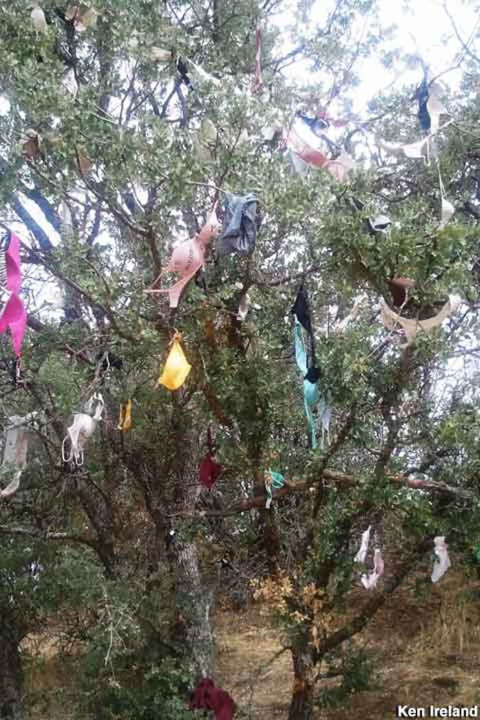 rape-tree-02力を誇示するため、犯して殺害した女
