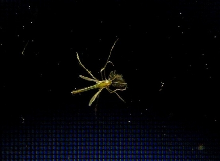 5ミリの虫 2018-08-15 001