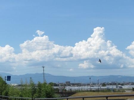 入道雲と燕 2018-08-13 022