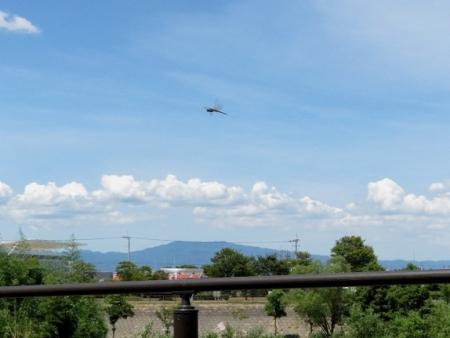 入道雲と燕 2018-08-13 013