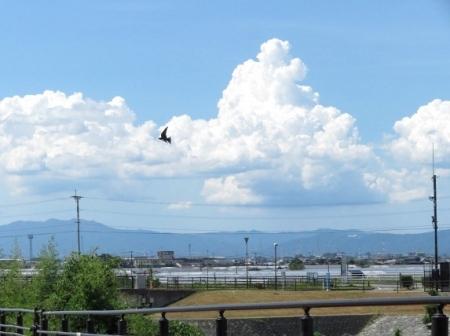 入道雲と燕 2018-08-13 024