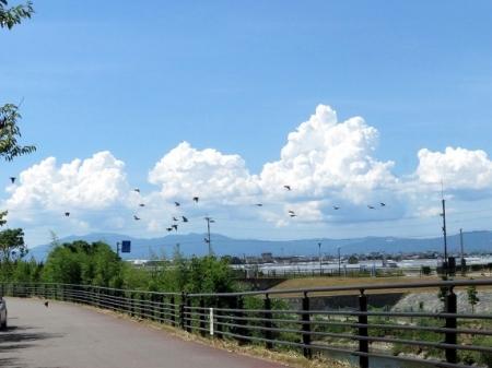 入道雲と燕 2018-08-13 026