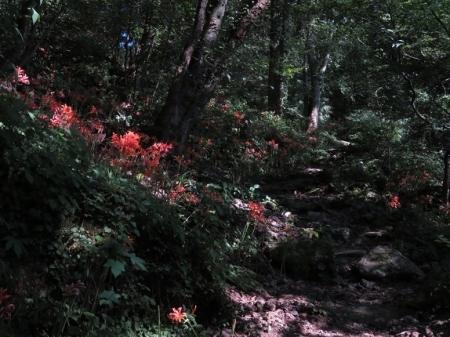狐八幡岳 2018-08-06 071
