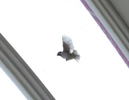 飛ぶ雀 2018-10-09 016