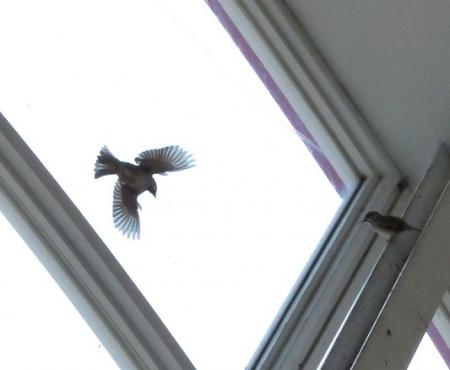 飛ぶ雀 2018-10-09 002