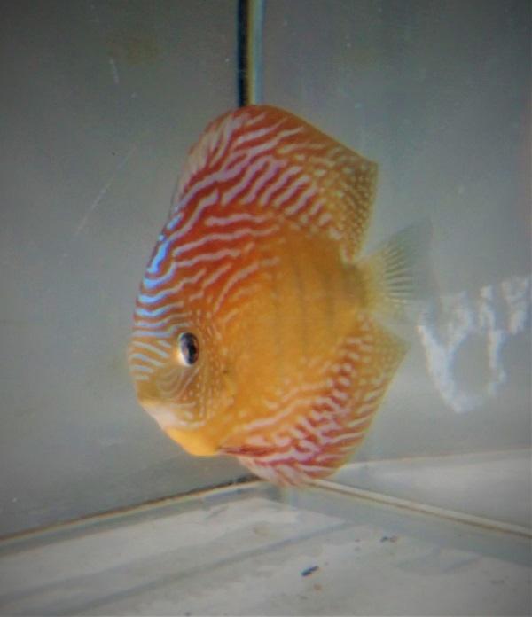 魚2 (1)