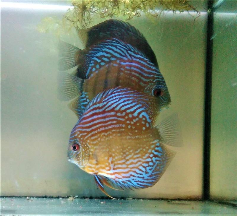 魚2 (2)