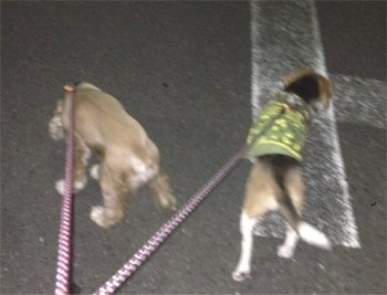 夜の散歩クウルルいくいく