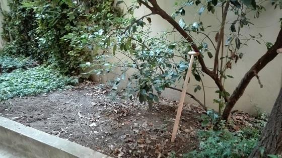 jardin3_20180903070651b0b.jpg